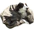 Jervenskyddet (hund)